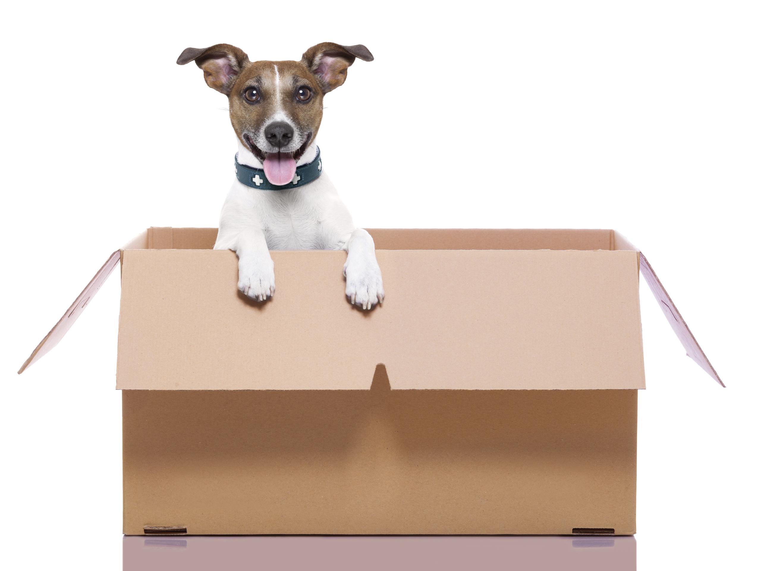 Pets At Home Dog Jumps